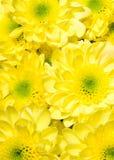 bukieta chryzantem kolor żółty Zdjęcia Stock