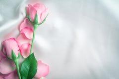 bukieta cukierki menchii róż płatek na miękkiej białej jedwabniczej tkaninie, Zdjęcie Stock