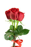 bukieta czerwieni róże fotografia royalty free