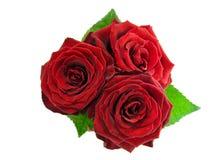 bukieta czerwieni róże Zdjęcia Stock