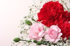 bukieta goździka horyzontalna różowa czerwień Fotografia Royalty Free
