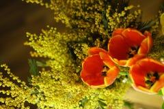 bukieta jaskrawy kwiatu obrazka wektor Czerwoni tulipany i mimozy Fotografia Stock