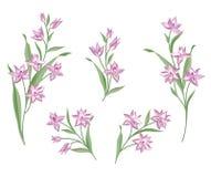 bukieta jaskrawy kwiatu obrazka wektor rama kwiecista wrobić serii Zawijasa kartka z pozdrowieniami Lato wystrój Obrazy Stock