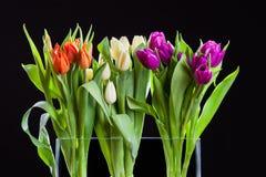 bukieta koloru ilustracja symuluje tulipanów wektoru wodę Obrazy Royalty Free