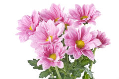 bukieta kwiatów menchie Fotografia Royalty Free