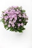 bukieta kwiatów menchie Zdjęcia Royalty Free