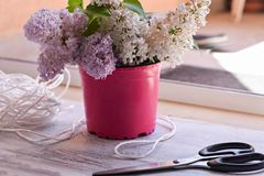 Bukieta Lily okwitnięcie z starymi żelazo ogródu nożycami na białym drewnianym background/wiosny background/ogrodnictwa pojęciu fotografia royalty free