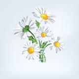Bukieta rumianek z faborkiem Kartka z pozdrowieniami z pięknymi kwiatami Fotografia Royalty Free
