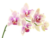 bukieta składu ilustracyjny orchidei lato wektor Fotografia Royalty Free