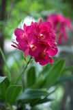bukieta składu ilustracyjny orchidei lato wektor obraz stock