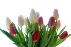 bukieta tulipan Zdjęcia Royalty Free