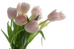 bukieta tulipan Fotografia Royalty Free