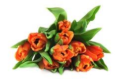 bukieta tulipan Fotografia Stock