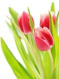 bukieta tulipan Zdjęcie Stock