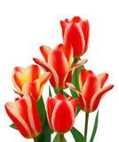 bukieta tulipan Obrazy Stock