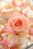 bukietów piękni kwiaty Zdjęcia Royalty Free