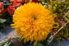bukiety kwiaty i ziele Zdjęcie Royalty Free
