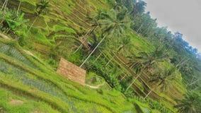 Bukit de Padi Photographie stock libre de droits