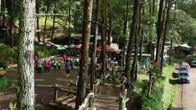 Bukit Sleker Magelang Java Indonesia central - Bukit Sleker - Forest Pine Trees verde almacen de metraje de vídeo