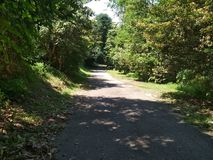 Bukit Timah nature reserve track. A wide hiking trail in tropical rainforest of Bukit Timah nature reserve in Singapore Royalty Free Stock Photos