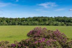 Bukolika krajobraz przy Dumfries domem w Cumnock, Szkocja, UK zdjęcie stock