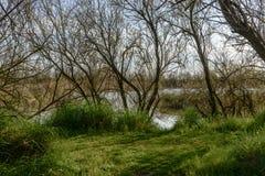 Bukolika krajobraz w natury oazie przy laguną, Volano, Włochy fotografia stock