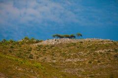 Bukolika krajobraz z sosnami na wzgórzu fotografia royalty free