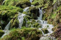 Bukovica river in Montenegro Royalty Free Stock Image