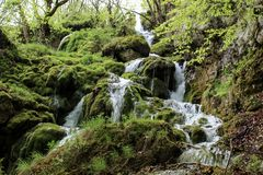 Bukovica river in Montenegro Stock Photos