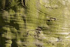 Bukowa drzewna barkentyna w zakończeniu Fotografia Royalty Free