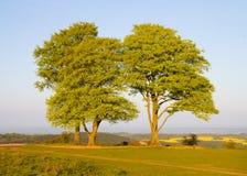 Bukowi drzewa na Quantock Wzgórzach w Somerset Zdjęcia Royalty Free