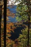 Bukowi drzewa w jesieni Zdjęcia Royalty Free