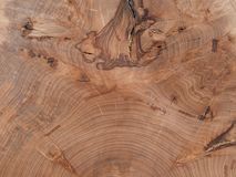 bukowy drzewo Zdjęcia Stock