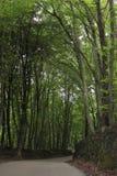Bukowy las i droga fotografia royalty free