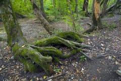 Bukowy las, lasowa zieleń 27 Fotografia Stock