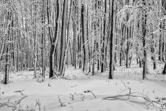 Bukowy las w zimie 2 Zdjęcia Royalty Free