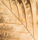 Bukowy liścia zbliżenie Zdjęcia Stock