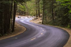 Bukta vägen i skog i den Yosemite nationalparken i USA Arkivfoton