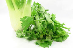 Bulb of Anise and celery stem and leaves. Royalty Free Stock Photo