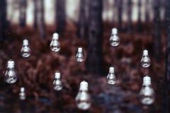 Bulb background mystic woods Stock Photo