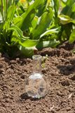 Bulb with clear water on dry soil Royalty Free Stock Photography