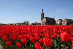 Bulb field in Holland Royalty Free Stock Images