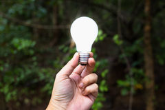 Bulb in Forest Stock Photos