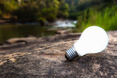 Bulb in forest Stock Images