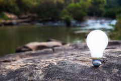 Bulb in forest Stock Photo