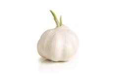 Bulb of garlic Stock Photos
