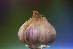 The bulb of garlic. The bulb of garlic with large slices of the blue - green background Stock Photos