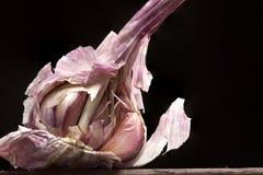 Bulb of garlic Stock Image