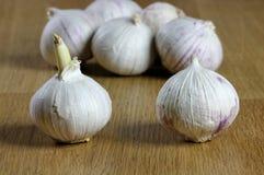 Bulb garlics Stock Images