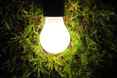 Bulb lamp glowing in the grass stock photos